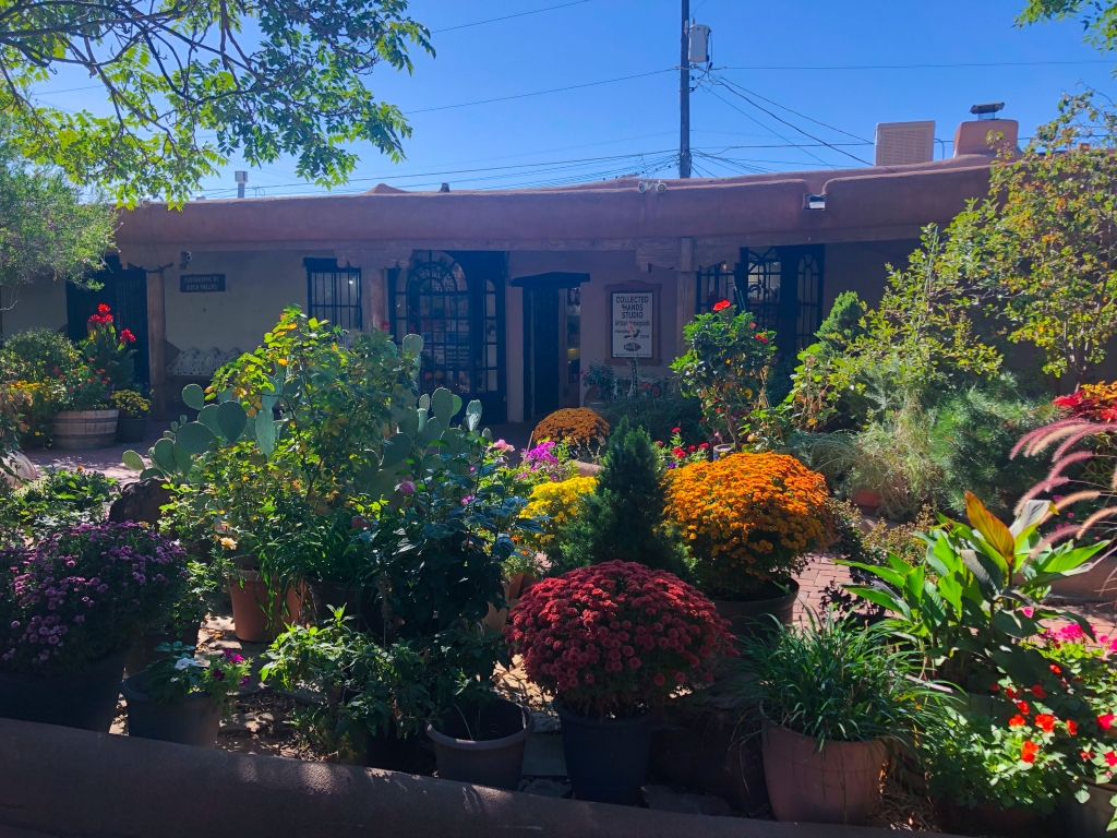 variety of plants and flowers outside in Old town Albuquerque