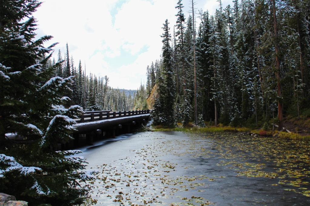 frozen pond with lily pads on the continental divide