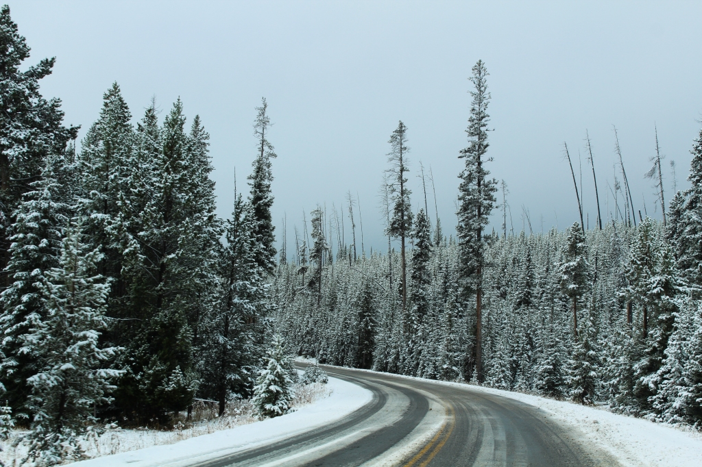 snowy road with snow covered trees on both sides